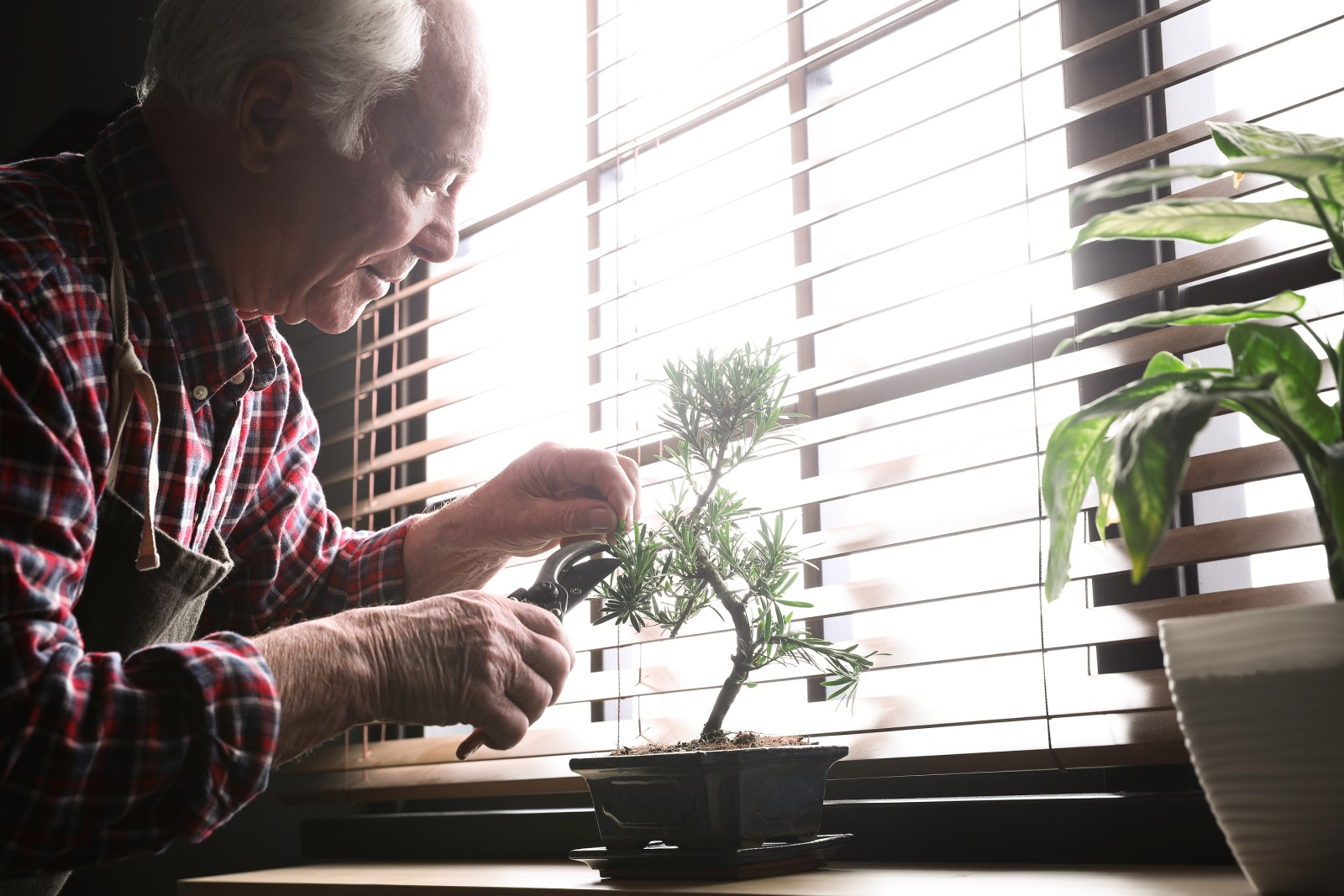 an elderly man taking care of indoor plants